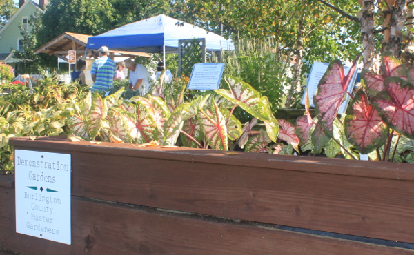 Raised Bed Displays