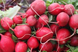 red redishes at the farmers market